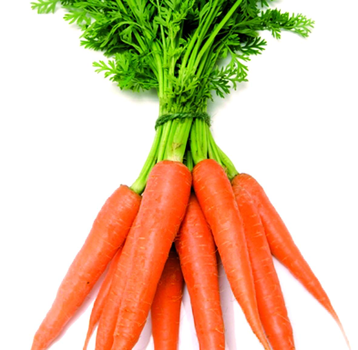 Carrot   Nature at Hom...